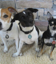 SMALL-DOGS-groupnew