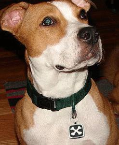 dog-wearing-cross-bone